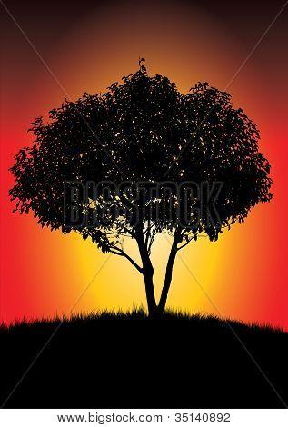 Solo árbol negro en Sunset