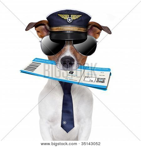Boarding Pass Dog