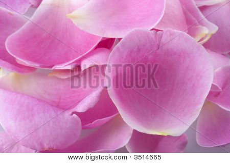 Macro Shot Of Pink Rose Petals