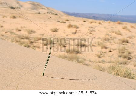 Sand dunes of Mohave Desert