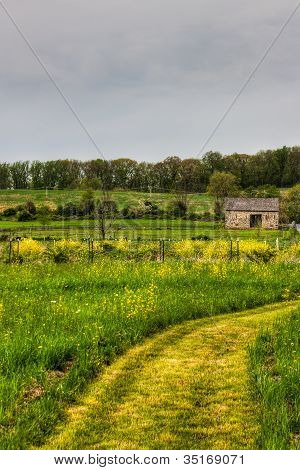 Barns Found In The Fields With Yellow Flowers