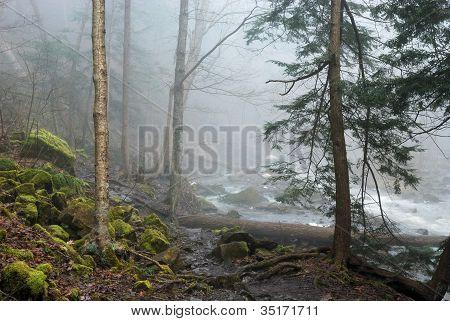Creek Fog