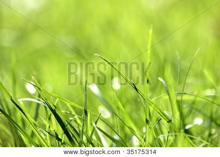 blades of grass in a field
