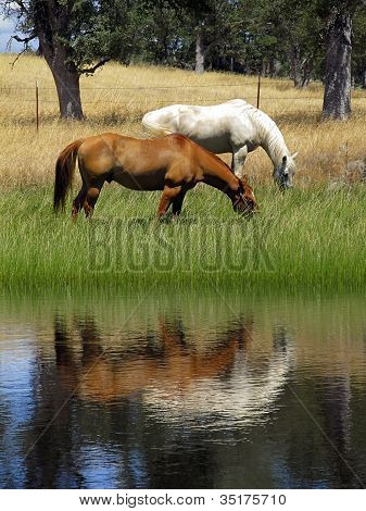 Ranch Horse Reflection