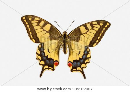 Swallowtail Butterfly, Latin Name Papilio Machaon Isolated On White