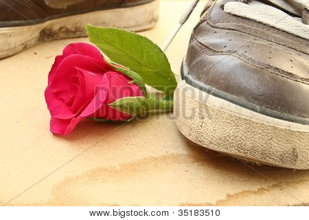 Shoe trample rose