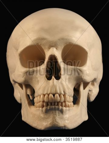A Forward Facing Skull