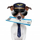 picture of boarding pass  - boarding pass dog with hat and tie - JPG
