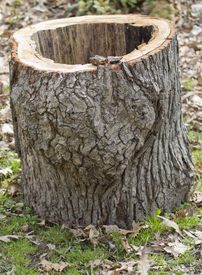 foto of hollow log  - A hollowed out White Oak tree log just cut up from a recent thunderstorm - JPG