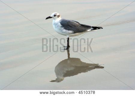 Seagul On The Beach