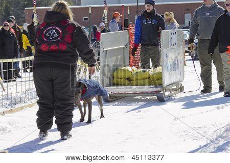 Dog Pulling Sled