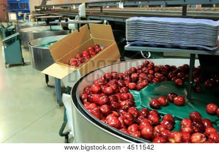 Red Apples In Packing Tub