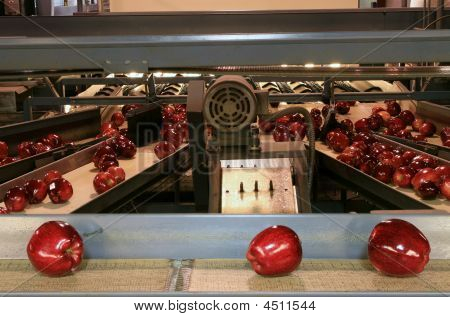 Apples On Conveyor Belt