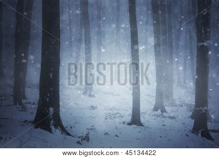Snow storm in a forest with fog in winter