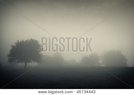 Gloomy scene with trees and fog on a meadow