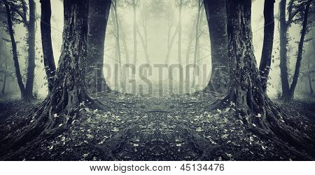 Eerie spooky scene of twin trees in a dark forest with fog on halloween
