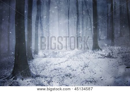 Blizzard in a dark forest with fog in winter