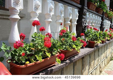 Flower Decorated Terrace Of A House At Moldova