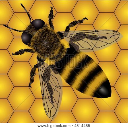 Bee On Honeycombs (seamless)