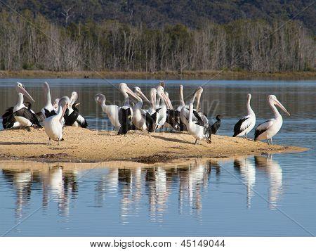 Pelicans on a sandbar