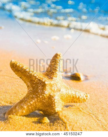 Fallen Star Starfish called Wanda
