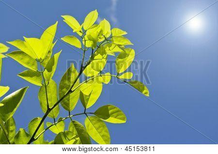 Fresh leaves under the sky