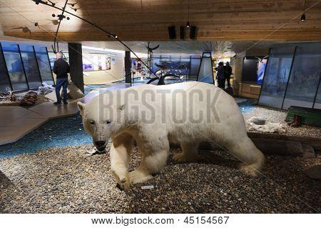 Svalbard Museum, Longyearbyena, Svalbard, Norway