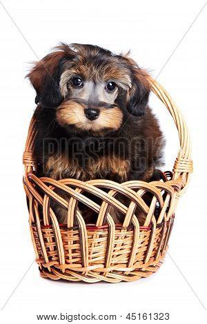 Puppy In A Basket.
