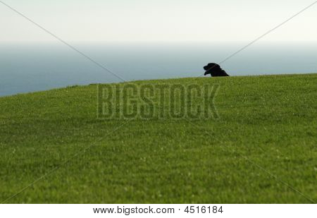 Dog Alone In The Park