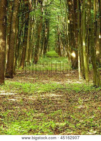Spiritual Forest Path