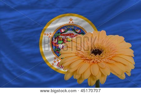 Gerbera Flower In Front  Flag Of American State Of Minnesota