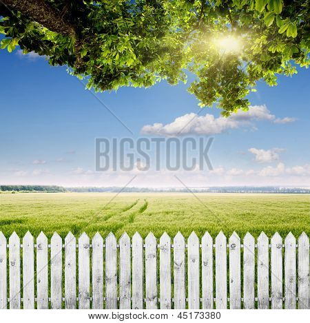 Fence with a view of the field of young wheat