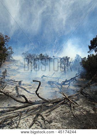 Smoking Brush Fire