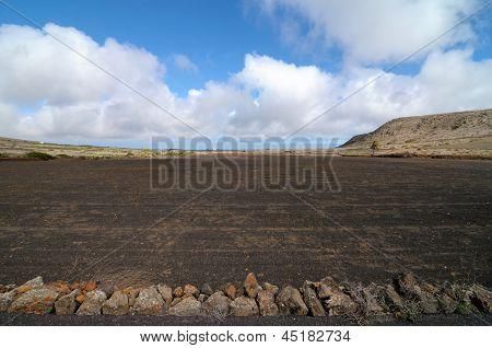 Field in the desert