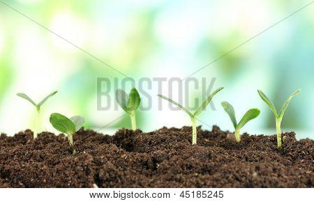 Verde plántula crece del suelo en fondo claro