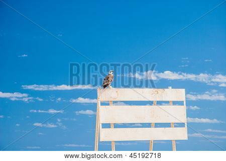 wild beautiful eagle in front of a blue sky
