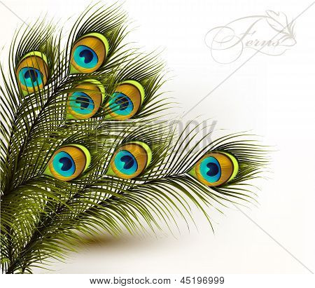 Peacock Vector Colorful Ferns On A White Background