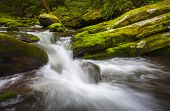 picture of gatlinburg  - Roaring Fork Great Smoky Mountains National Park Cascade Gatlinburg TN waterfalls in lush green foliage - JPG