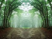 stock photo of trough  - Road trough a strange symmetrical green forest with fog - JPG