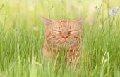pic of tall grass  - A blissfully happy orange tabby cat enjoying life in tall spring grass in a shade - JPG