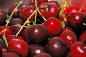 stock photo of bing  - Bing Cherrys picked from James Orchard near Winston Oregon - JPG