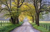picture of dirt road  - Cades Cove Great Smoky Mountains National Park Scenic Landscape Spring photography on Sparks Lane - JPG