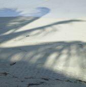 Постер, плакат: Тень дерева пальмы на пляже