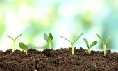 stock photo of fertilizer  - Green seedling growing from soil on bright background - JPG
