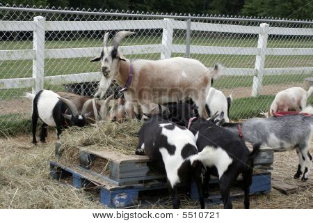 Barnyard Breakfast