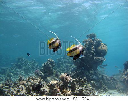 Fish couple