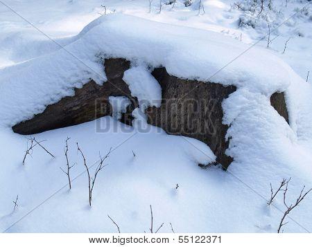 Old tree stump with snow