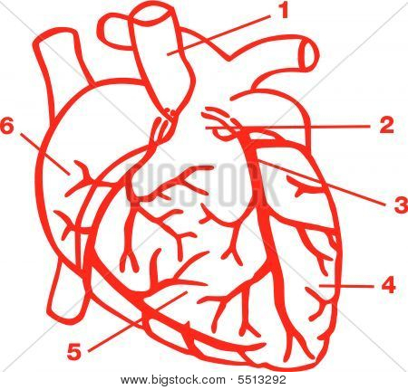 human heart diagram with labels. heart diagram without labels.