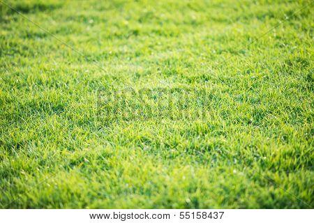 Green Grass Pattern From Golf Course