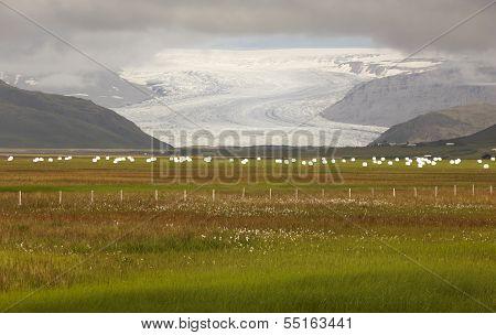 Iceland. Southeast Area. Flaajokul Glacier And Field.